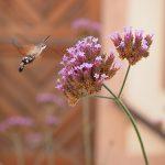 Local flora and fauna
