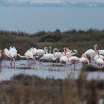 Stunning flamingoes!