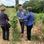 Amongst the vines at Chateau de Chamirey