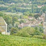 The famous Burgundy vineyards