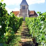 Chablis Church Vineyards Brocard