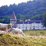 Charolais Cow Chateau Bazoches