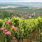 Burgundy Irancy View Vines